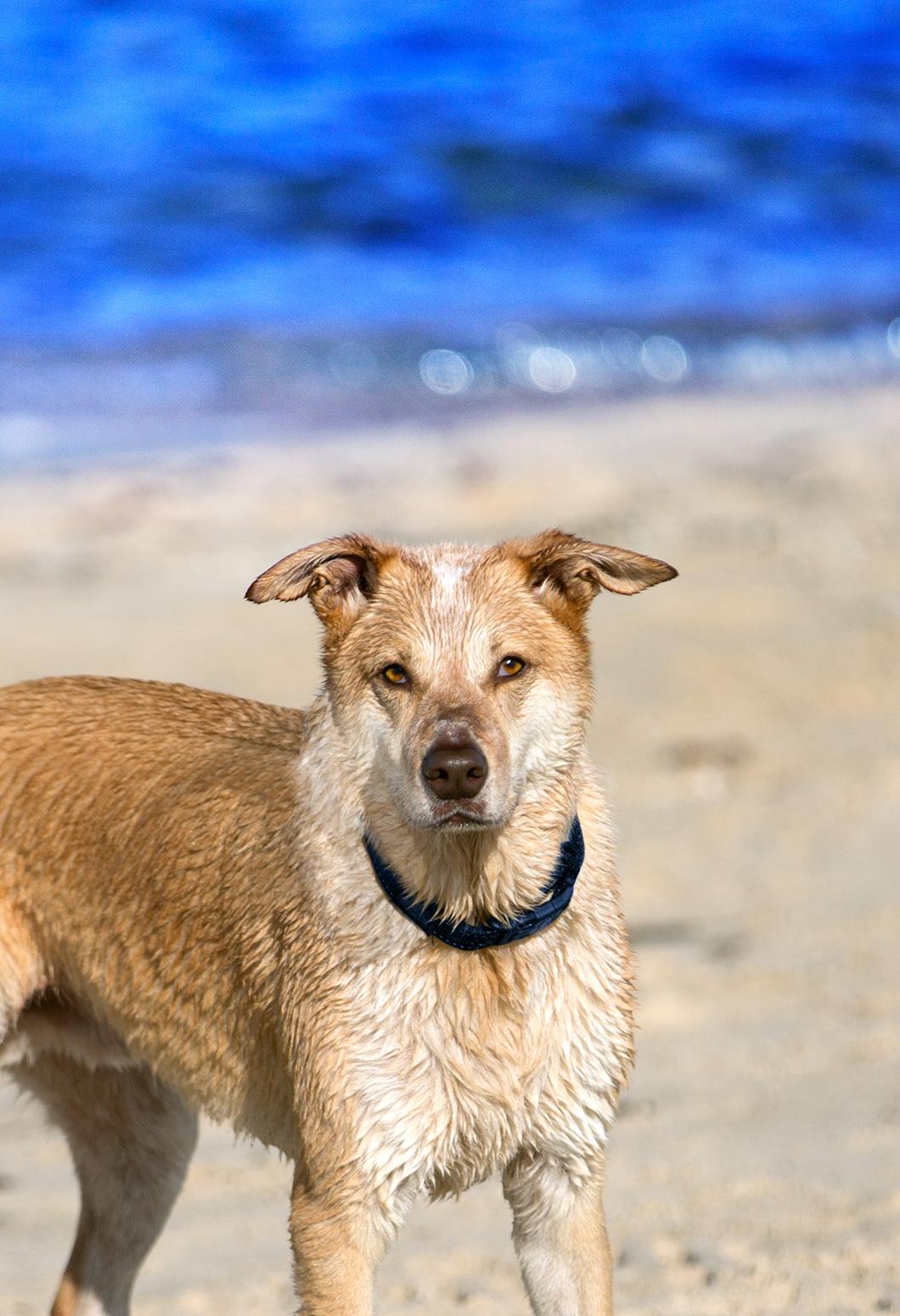 Melaleuca Seaside Retreat - Beach Play - Here's Looking at You