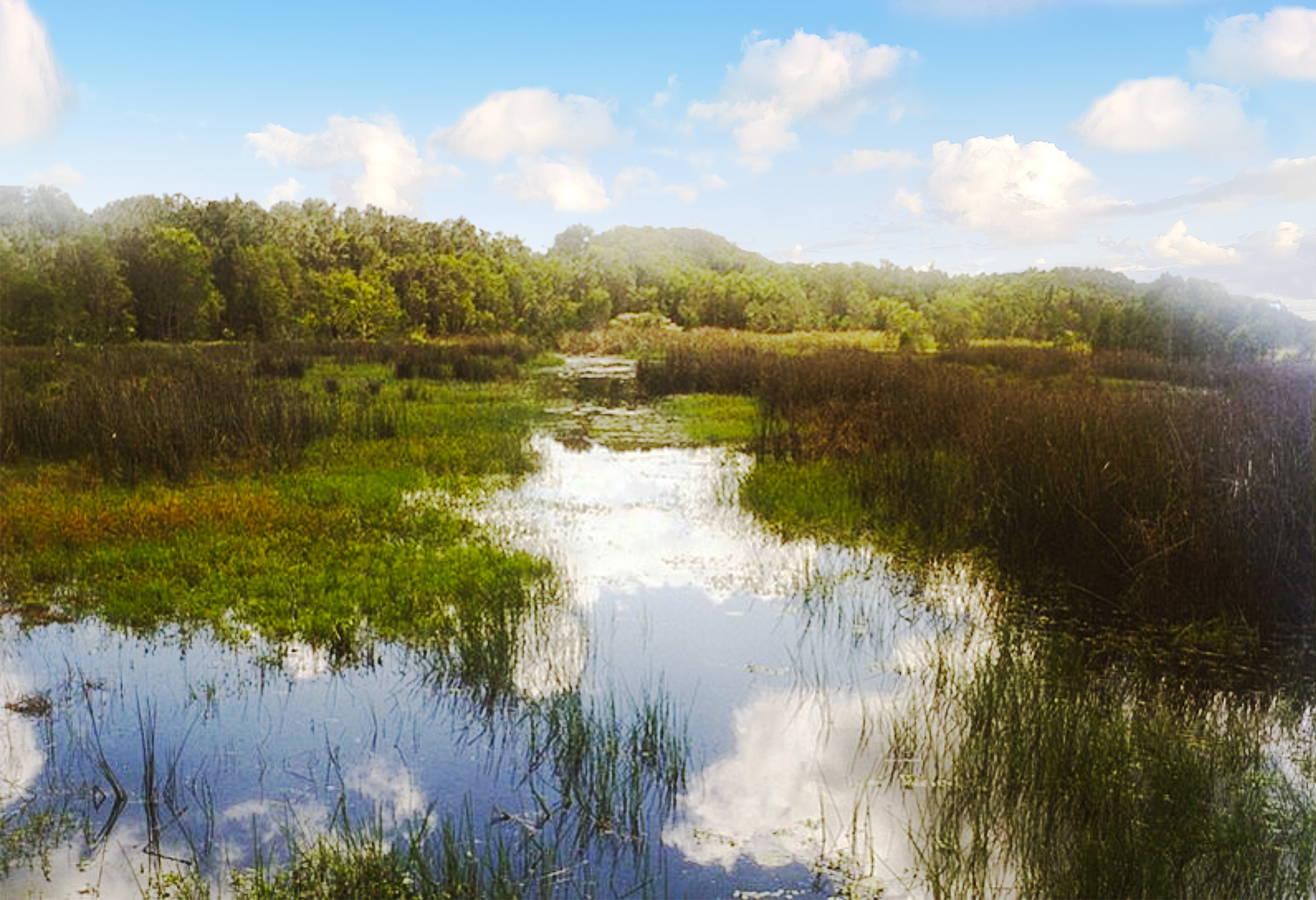 Melaleuca Seaside Retreat - Wetland to Forest